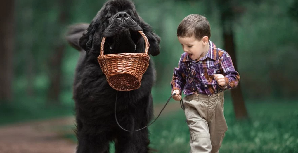 Little Kids and Their Big Dogs by Andy Seliverstoff will steal your heart!