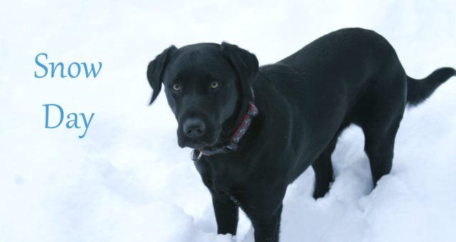 A snow day, a morning walk, and a black lab | Chapel Hill, North Carolina
