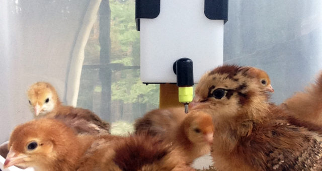 Five Photos: August   Families, Friends, and more Chickens