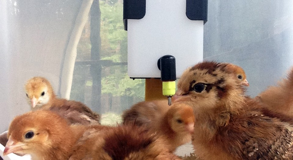 Five Photos: August | Families, Friends, and more Chickens