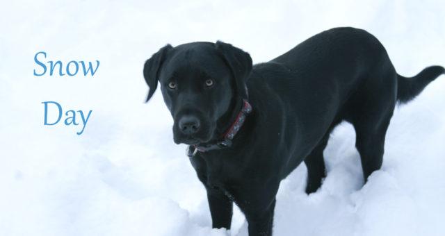 A snow day, a morning walk, and a black lab | Chapel Hill, North Carolina