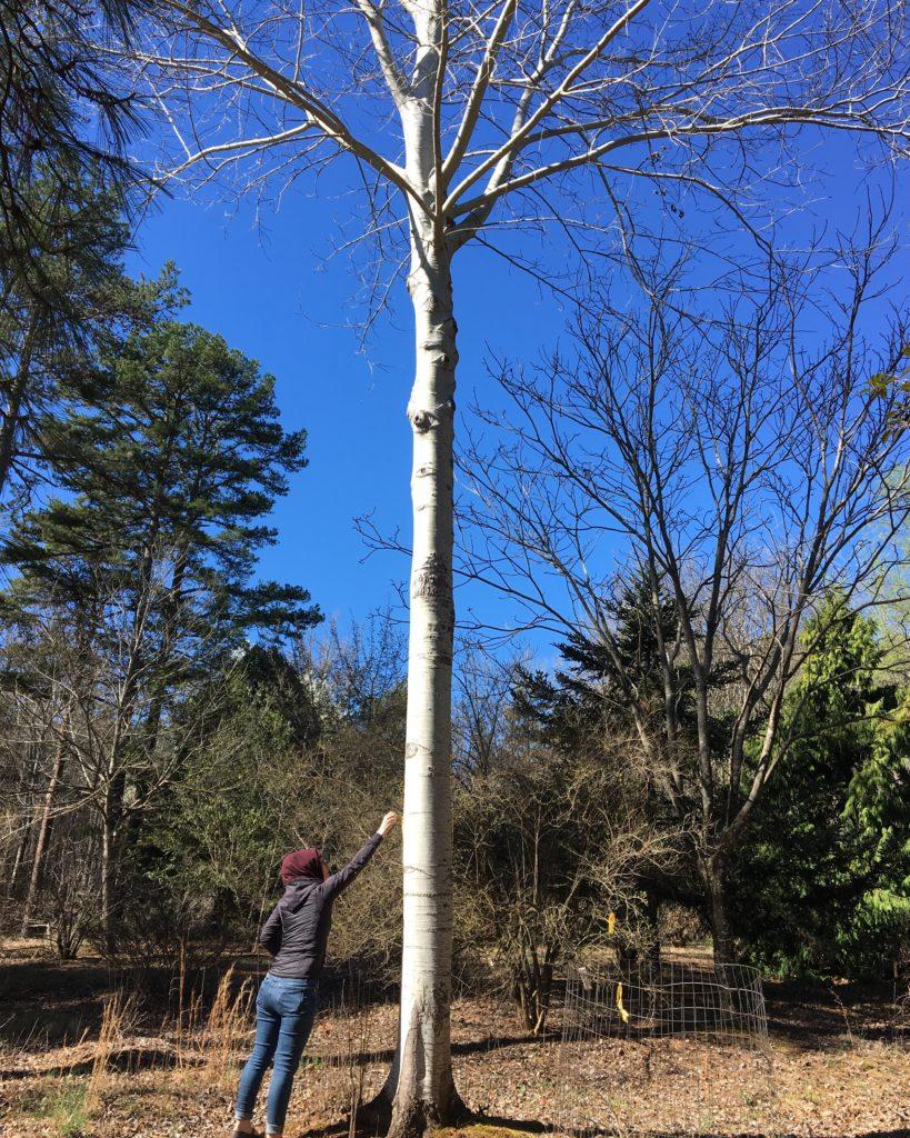 Bridal site visits sometimes involve trees.