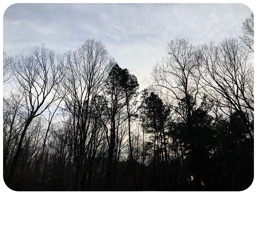 Barbara Bell Photography near Chapel Hill, NC captures the outdoors to bring indoors.